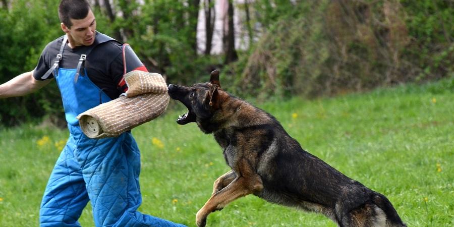 Kinh nghiệm xử lý khi bị chó cắn tấn công