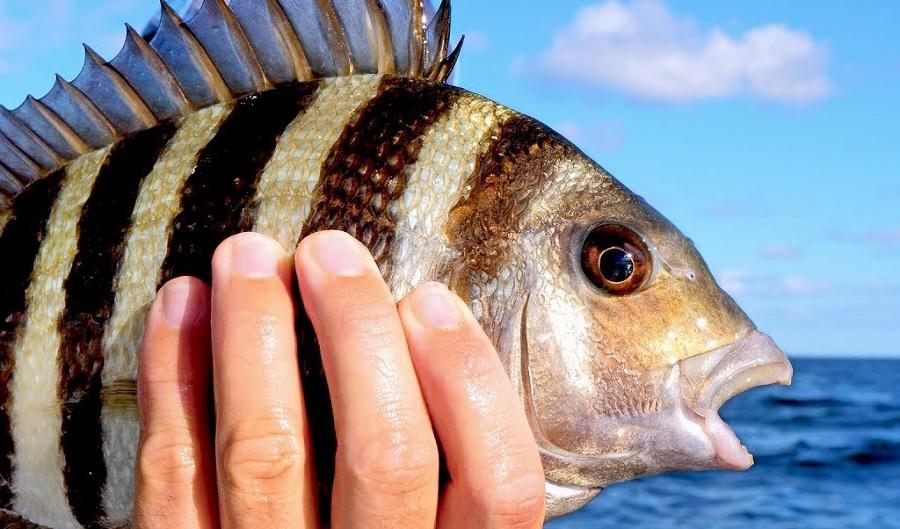 Nên ăn cá sông hay cá biển thì tốt hơn