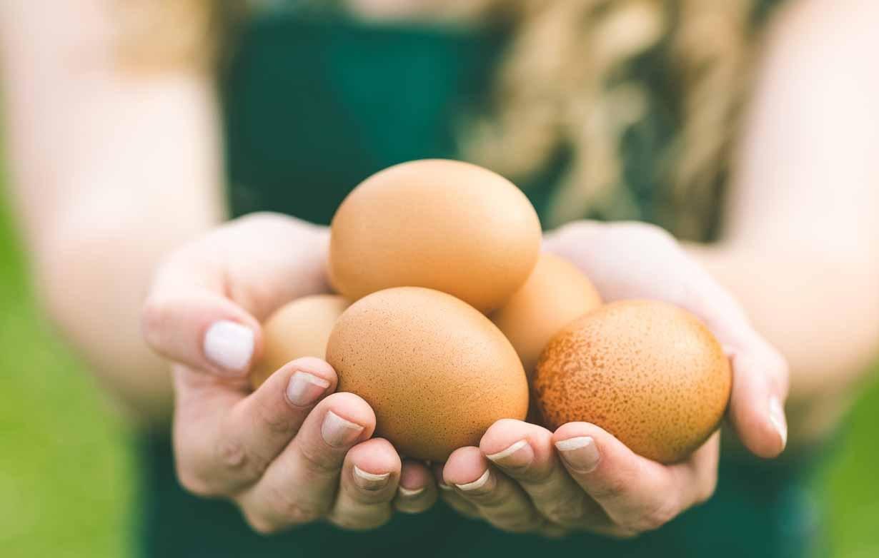 Ăn nhiều trứng mỗi ngày có bị sao hay không