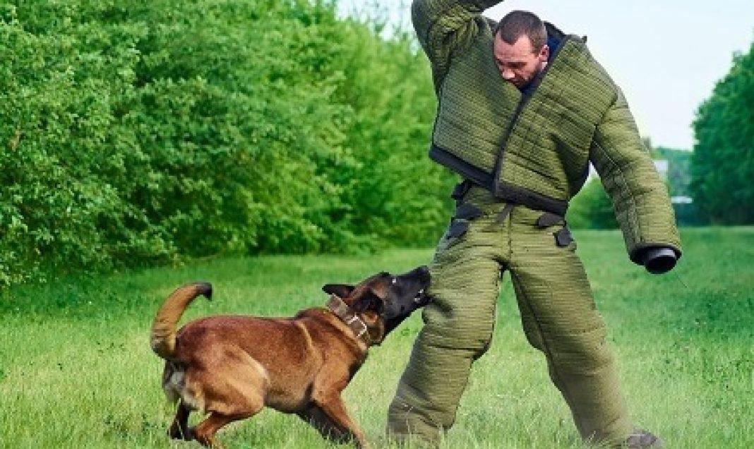 Cách phòng chó cắn tấn công